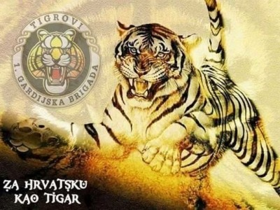 tigrovi11 201500001