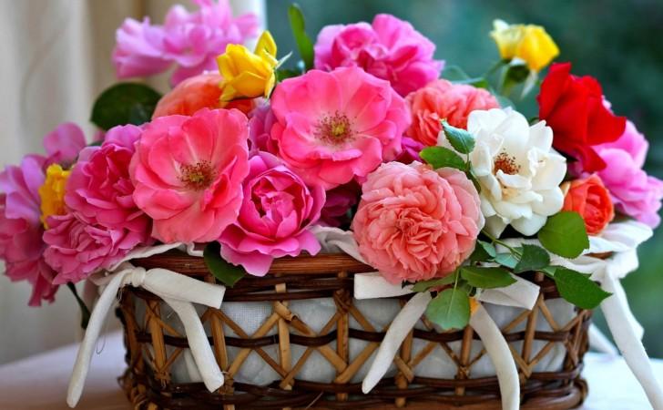 Kosara cvijece
